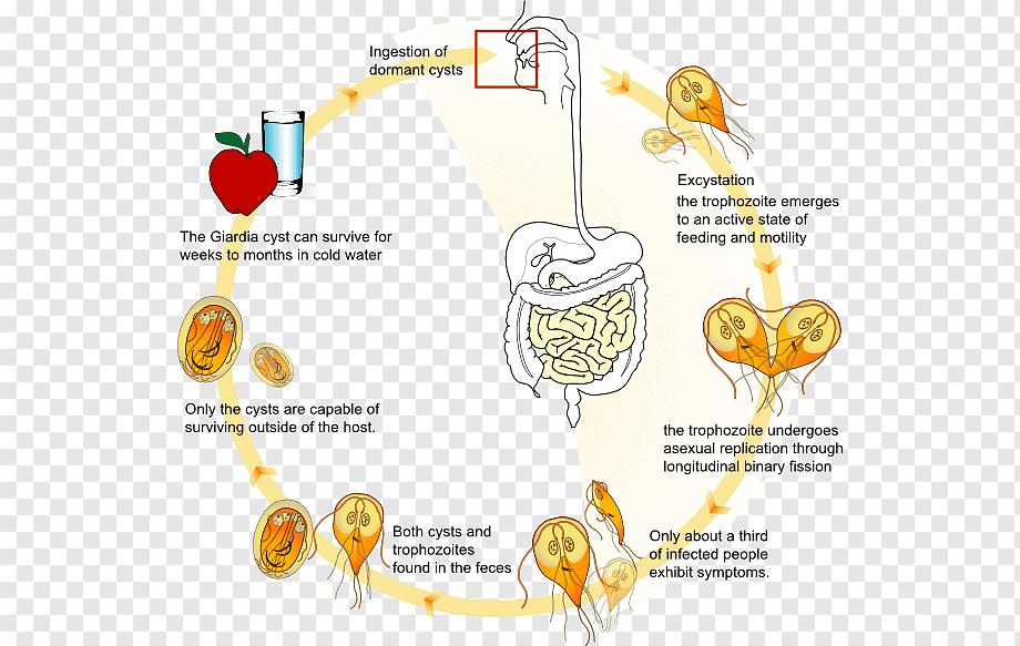 amebieza giardiozei