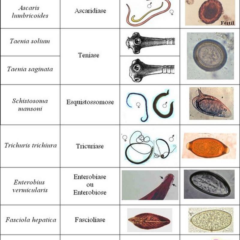 enterobius vermicularis artigo cancer de prostata fase 2