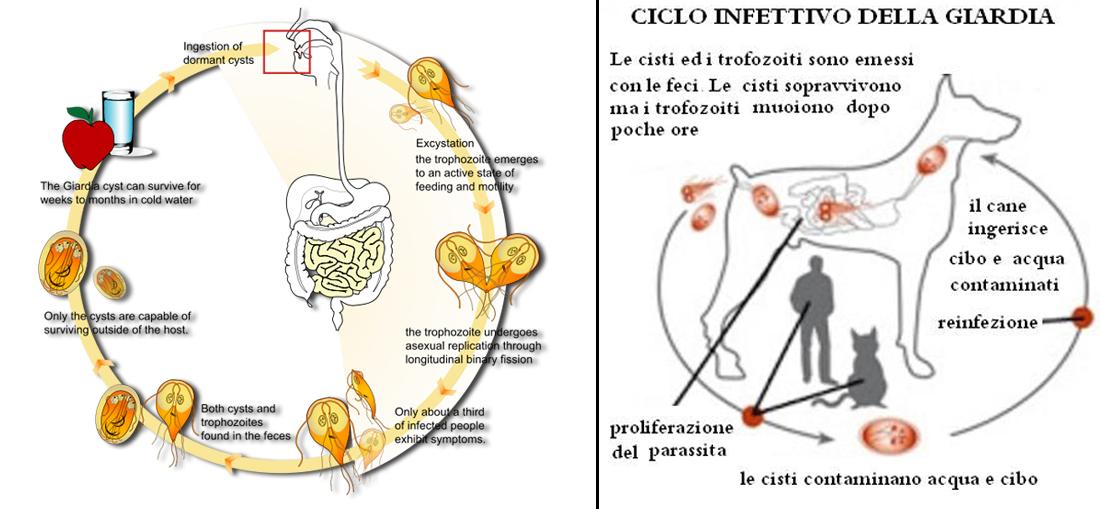 basal cell papilloma