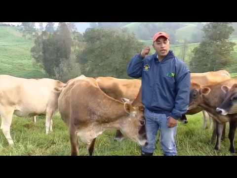 que es papilomatosis en bovinos hpv gardasil vis