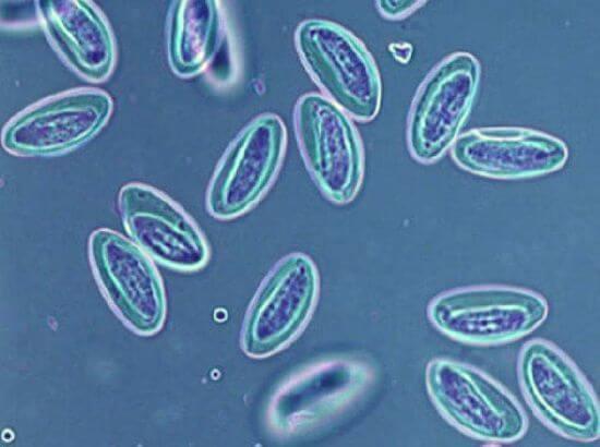tipuri de papilomavirus uman la femei