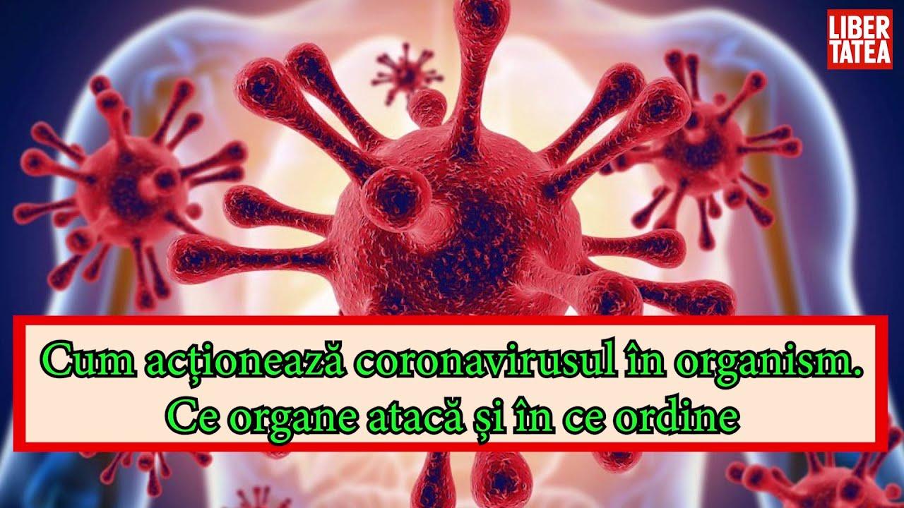 enterobioza în recomandările clinice pediatrice)