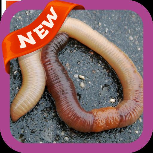 Tratament cu bandă de viermi