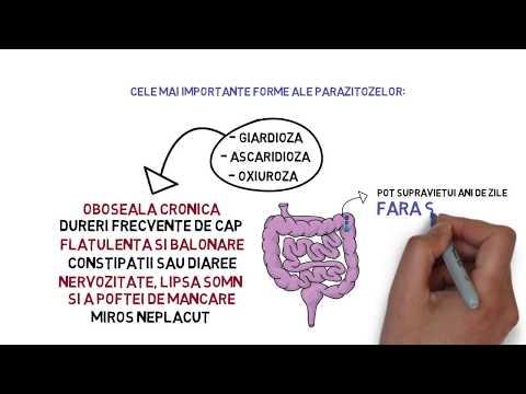 nutriție la curățarea corpului parazitului papilloma virus vaccino quanto dura