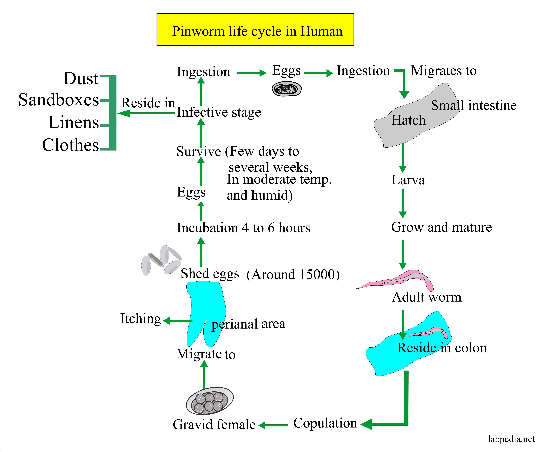 Human papillomavirus in kenya. Colorectal cancer hereditary - Human papillomavirus in kenya