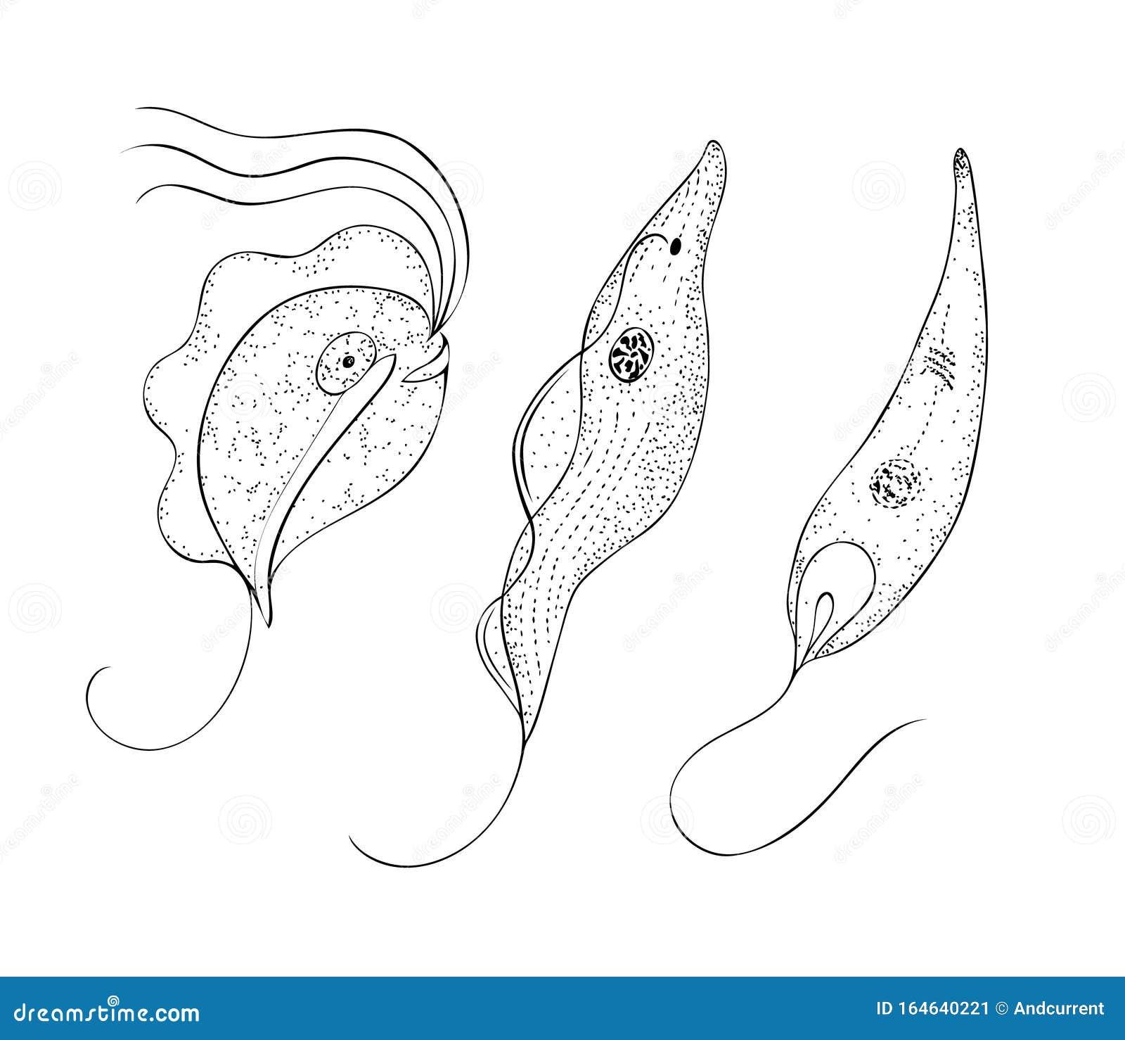 papiloma ductal birads viermi la un copil cum să scapi
