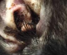 Tratamentul paraziților la urechea omului, Viermii intestinali