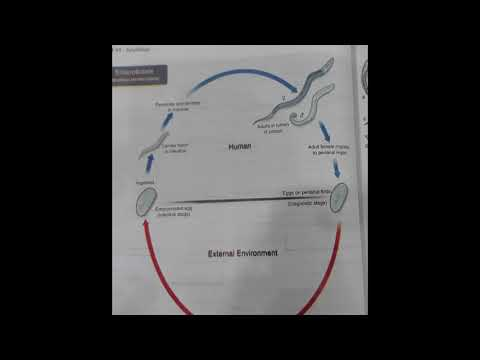 cum să prevină viermii să obțină viermi negi plantare cum să scapi repede