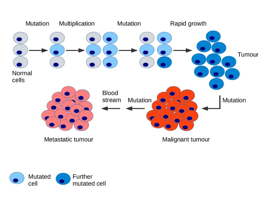 cancer genetic causes le papillomavirus vaccin