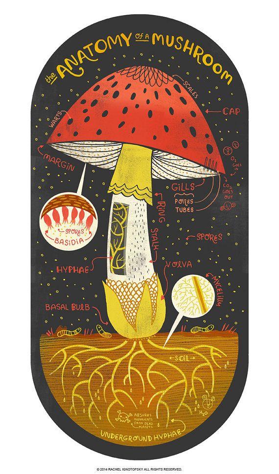 ciuperci jumbo verucă plantară psihosomatică louise hei