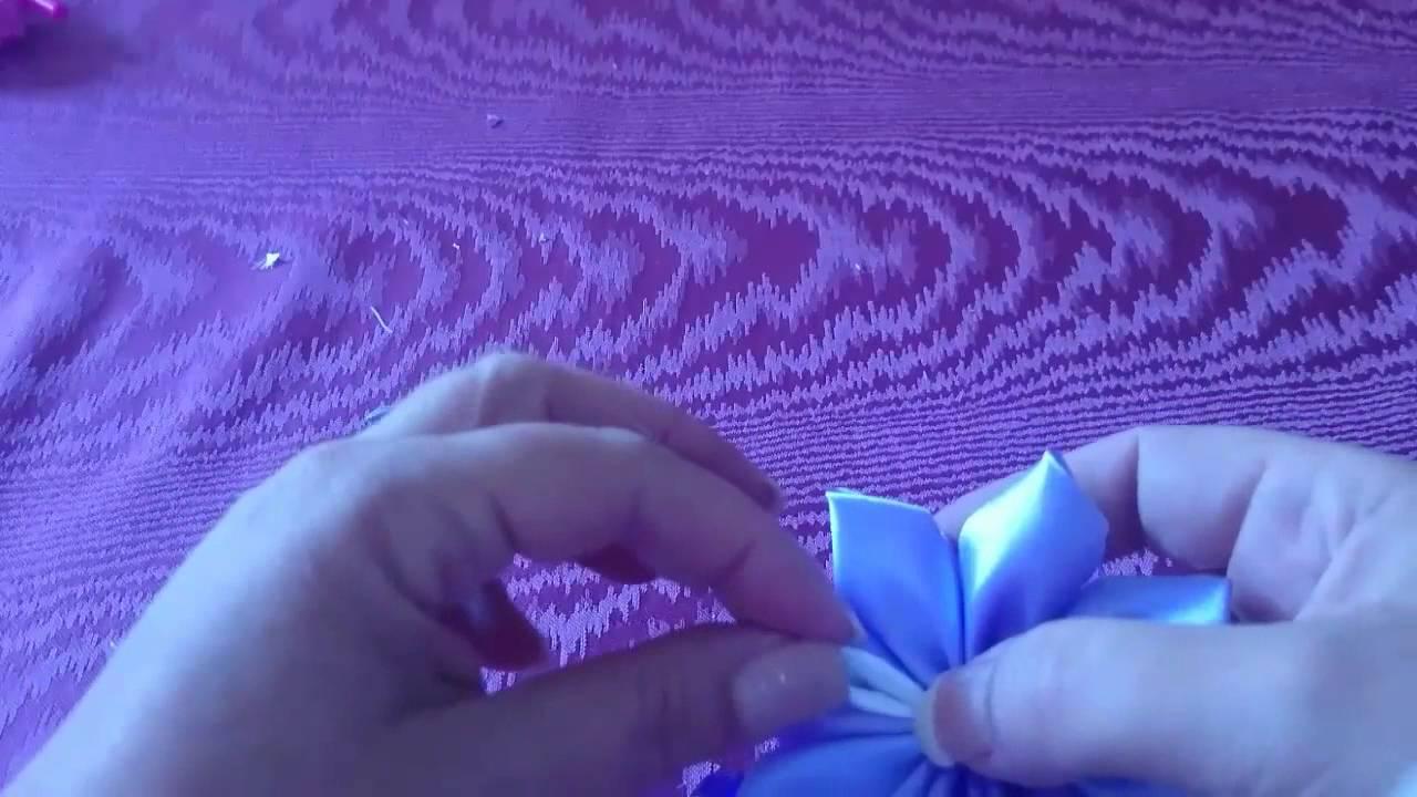 panglica largă scolex