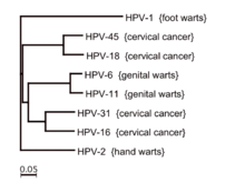 can hpv type 16 cause genital warts