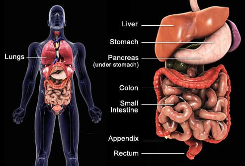 abdominal cancer fruits pancreatic cancer depression