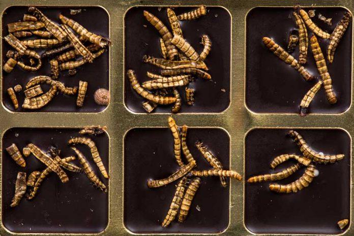 semne și tratament de viermi