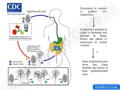 simptom de infecție giardia