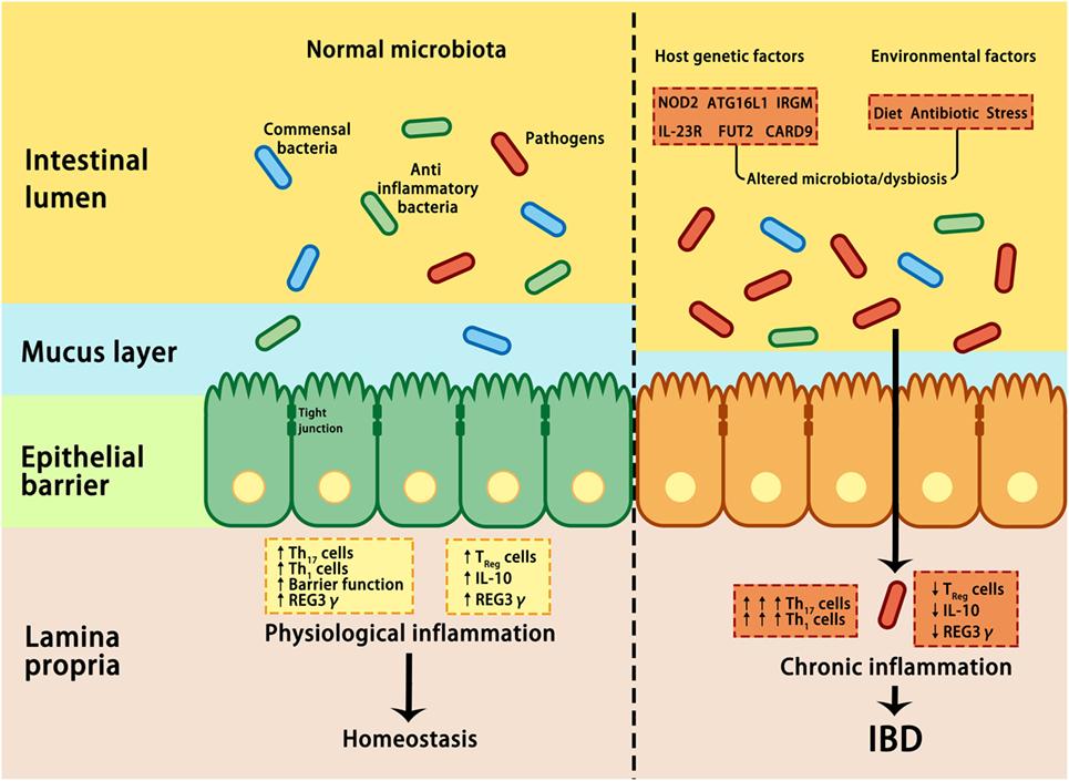dysbiosis disease viermi subțiri