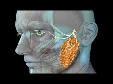 Examinarea materiilor fecale pentru protozoare și ouă de helmint - Intestine
