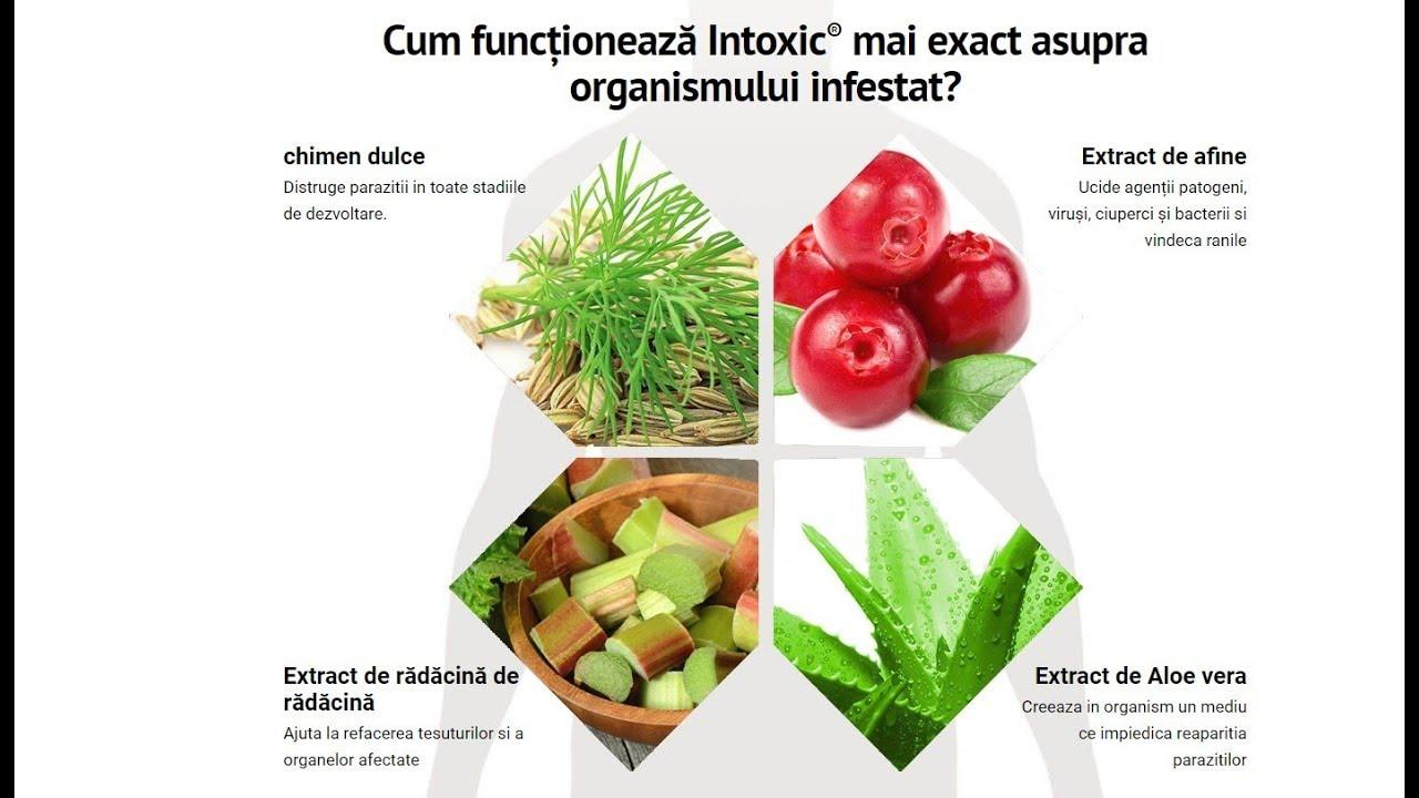 Leacul natural al viermilor. 7 remedii naturale contra parazitilor intestinali