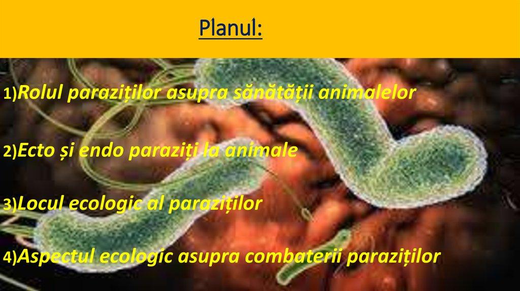 paraziți și viermi Cum sunt tratate papilomele la bărbați?
