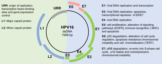 hpv virus shqip