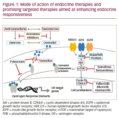 cancer endocrine therapies