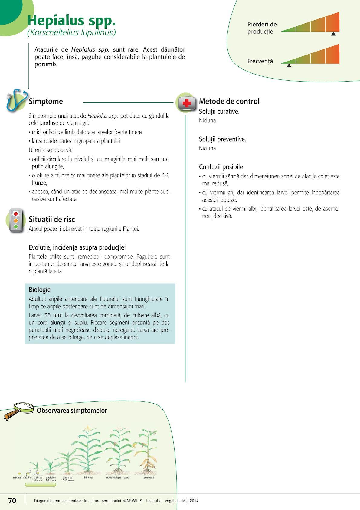 frecvența viermilor condiloame pe intestin
