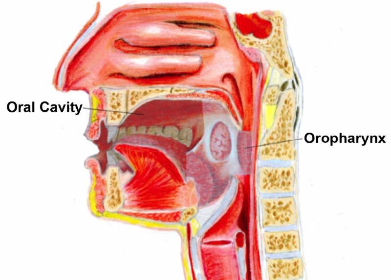 hpv virus head and neck cancer condiloame cât de periculoși sunt