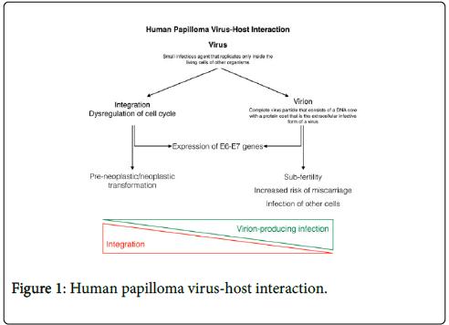 Asl 3 papilloma virus