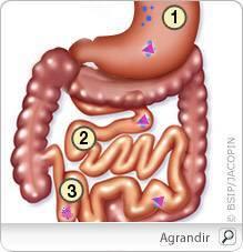 Deficitul de vitamina B cauze, riscuri si simptome | anaairporthotel.ro
