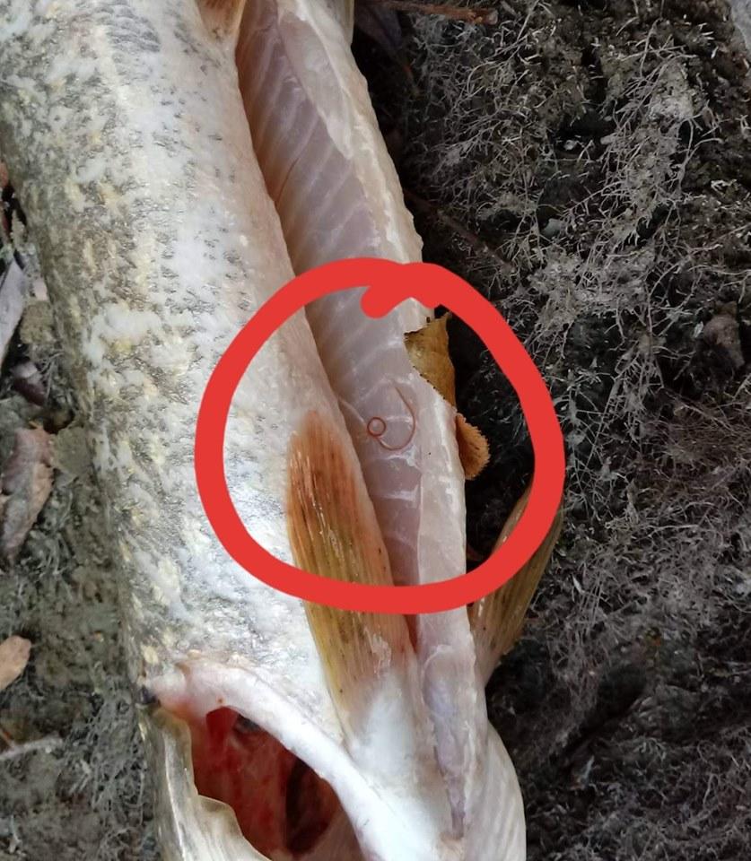 trichiocefalie intermediară paul chek paraziți
