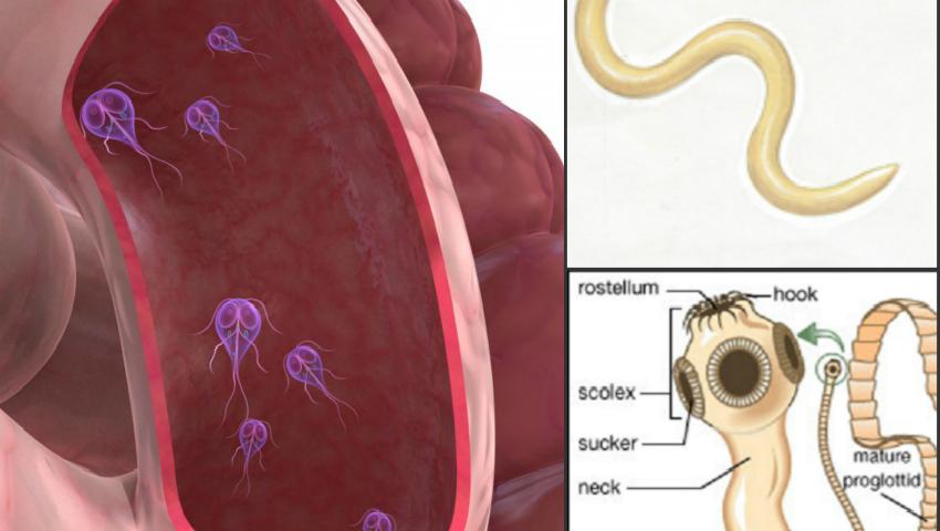 cancer origen hormonal semne de helmint la femeile adulte