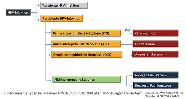 hpv impfung nach infektion papiloame sub piept