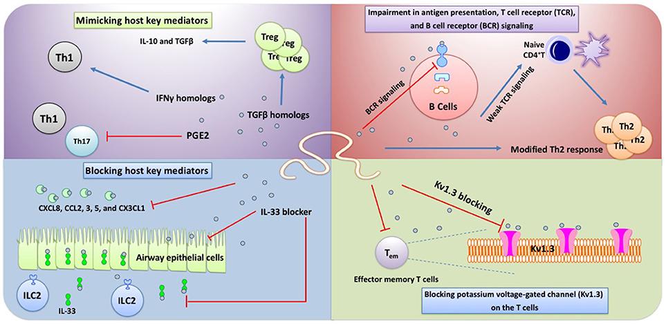 Helminth droguri invazive - Simptomele și tratamentul paraziților canalului biliar