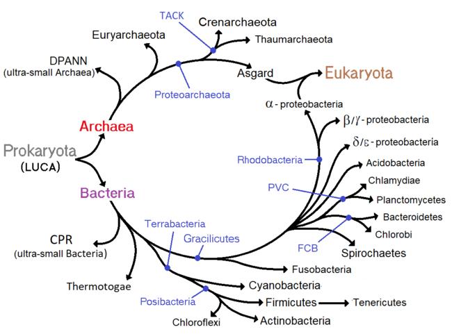 paraziți ai bacteriilor