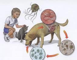 giardia bebélusi simptome)