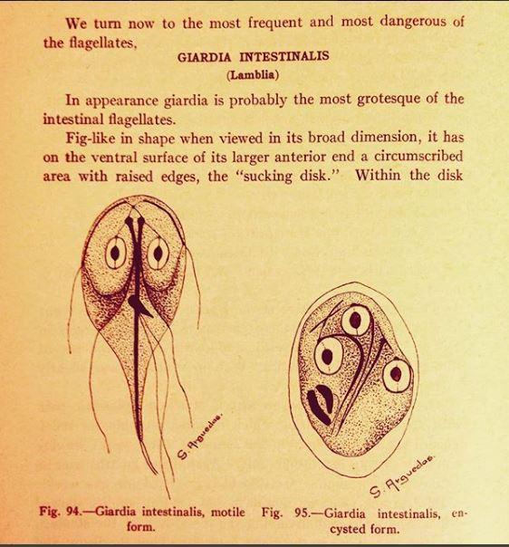 giardiază în engleză cum să distrugă viermii la oameni