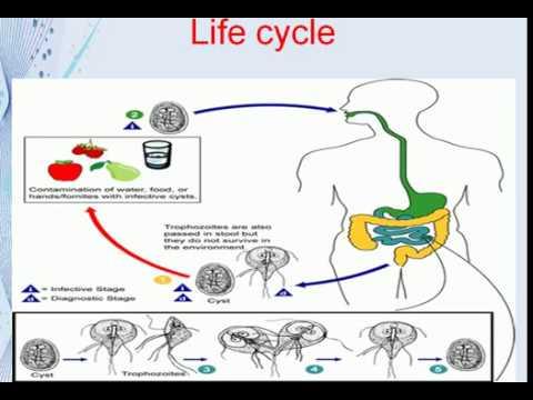 metoda de îndepărtare a paraziților din organism)