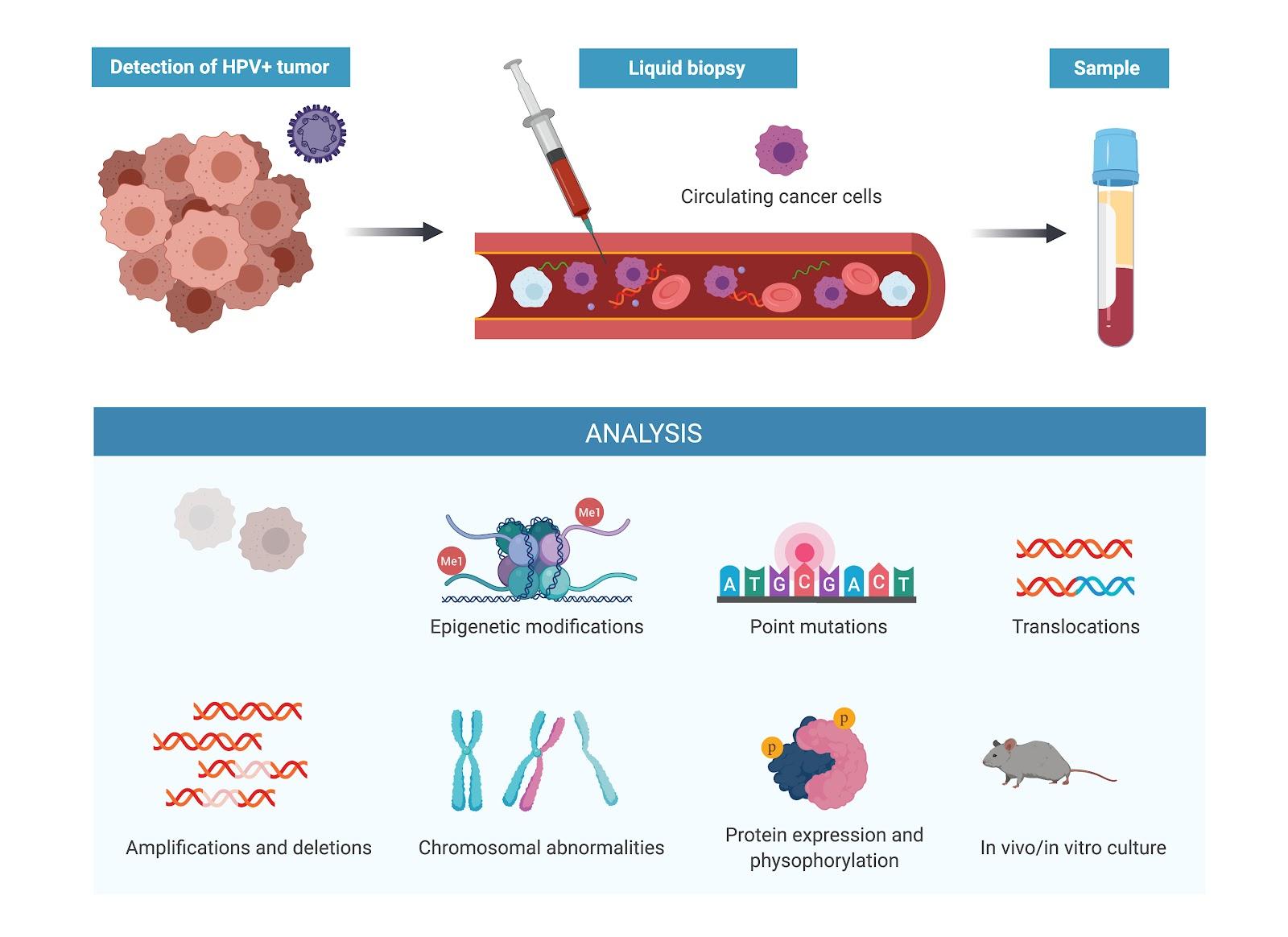 human papillomavirus dna or rna)
