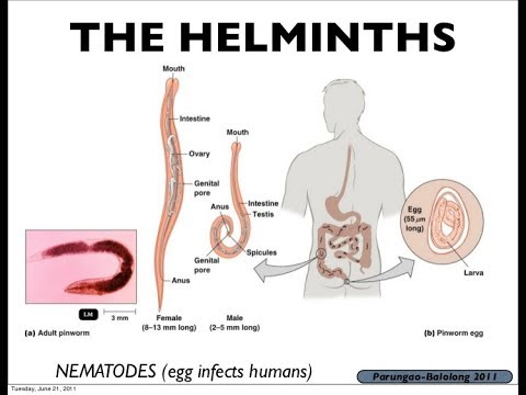 helminth infection in humans paraziti de încleștare a dinților