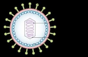hpv virus epstein barr