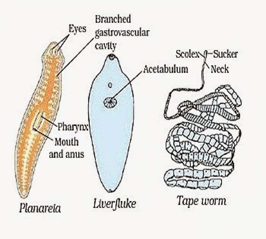 îndepărtați papilomul cu care medicul trebuie contactat medicamente pentru prevenirea paraziților intestinali