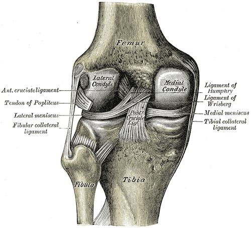 ligamentele papilomelor unguente hpv pentru bărbați