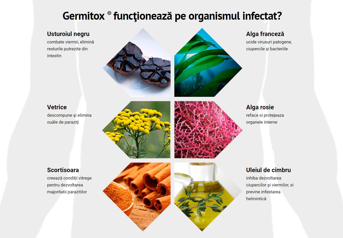 curățarea organismului de toxine de toxinele parazitului)