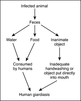 etiologia giardiozei