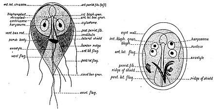 papilloma of nasal cavity cheloo koblenz