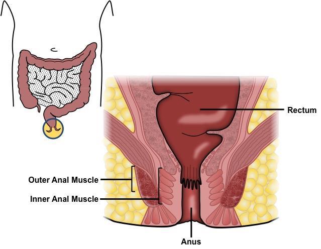 GHID 09/08/ - Portal Legislativ Sentimente de tumoră malignă a unui orb