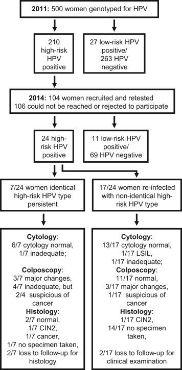 hpv high risk heilung unguent genital negilor pentru tratament