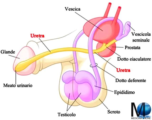 hpv uretrale sintomi