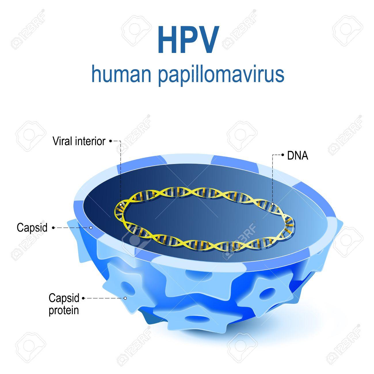 adn human papilloma virus)