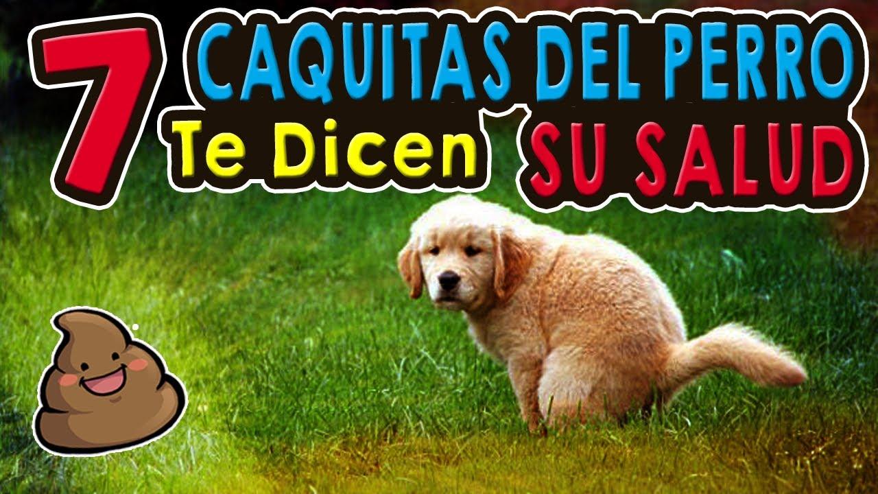 Parasitos oxiuros perros Oxiuros en perros tratamiento